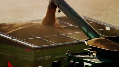 小麦农业丰收视频机械收割小麦