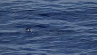 延时摄影 高清实拍素材 海洋视频