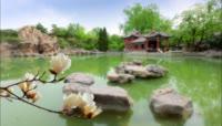 北京城市风光 唯美风景天安门红旗牡丹花梨花开故宫角楼高清实拍视频素材