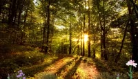 森林里秋天的美丽景色