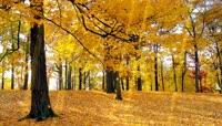 蝴蝶飞舞森林中秋天的美丽景色