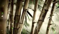 神奇大自然的花草树木蝴蝶