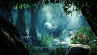 原始森林大自然的奇观