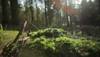 阳光照射下的森林