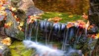 清澈的河流美丽的野花