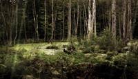 森林:大自然的美丽景色