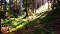 秋天森林:大自然的美丽景色