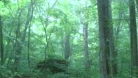 森林山间\(有音乐\)