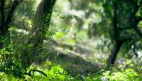 4K清新大自然森林