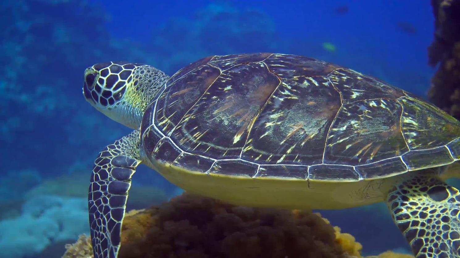台湾水域 海洋生命 海洋生物 海龟 珊瑚 鱼类 浮游生物
