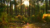 阳光穿过森林