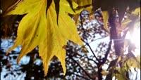 阳光下被风吹拂的绿叶