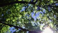 阳光下的林荫
