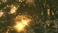 阳光穿过茂密的树叶