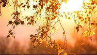 唯美微风吹动树叶