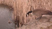 鸟儿掉进水里
