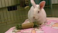 小白兔在笼子里吃草