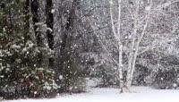 大雪纷飞的森林