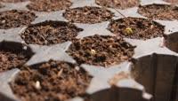 种子发芽破土而出的视频