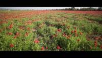 盛开的花儿草地草坪