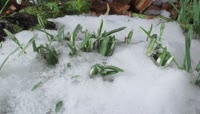 11春季白雪消融视频