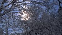 63阳光照耀下枝条上落下的雪水