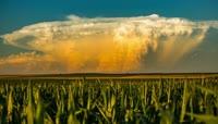 农田的四季玉米地
