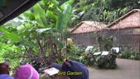 10新加坡鸟花园