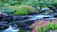 12蝴蝶飞飞小河流水花儿朵朵开