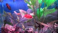 4唯美大气的鱼缸及漂亮的鱼LED背景