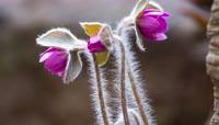韩国4K 花朵延时摄影 花朵生长 植物生长 生命力 鲜艳花朵