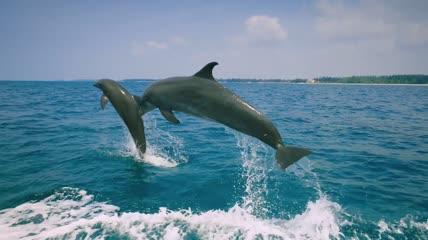 海豚 海洋 海洋生命 海豚生活  海洋的精灵  海豚雨人类  跳跃海豚 海豚表演 海豚纪录片 海豚救治 海豚训练 可爱海豚 海洋生物 4