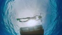 海豚 海洋 海洋生命 海豚生活  海洋的精灵  海豚雨人类  跳跃海豚 海豚表演 海豚纪录片 海豚救治 海豚训练 可爱海豚 海洋生物 3