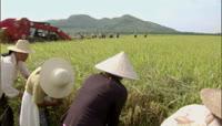 机械收割水稻1