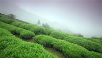 茶山\(雾萦绕\)