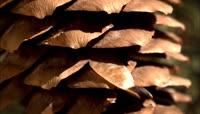 绝美超美最美 森林风景 小动物 草 蘑菇生长