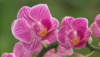 美丽的鲜花开放一组