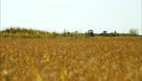 收割水稻 丰收 农业生产 稻谷