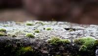 野生蘑菇生长空间菌类植物自然生长在潮湿阴暗地方