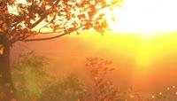 夕阳 秋天金色 金黄