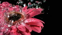 一组水的写意镜头  水珠 水滴落花朵 滴进水面 瀑布慢镜头 水柱喷溅