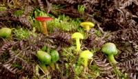植物快速生长\-蘑菇菌类
