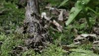 竹笋快速生长