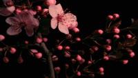 各种花开过程2
