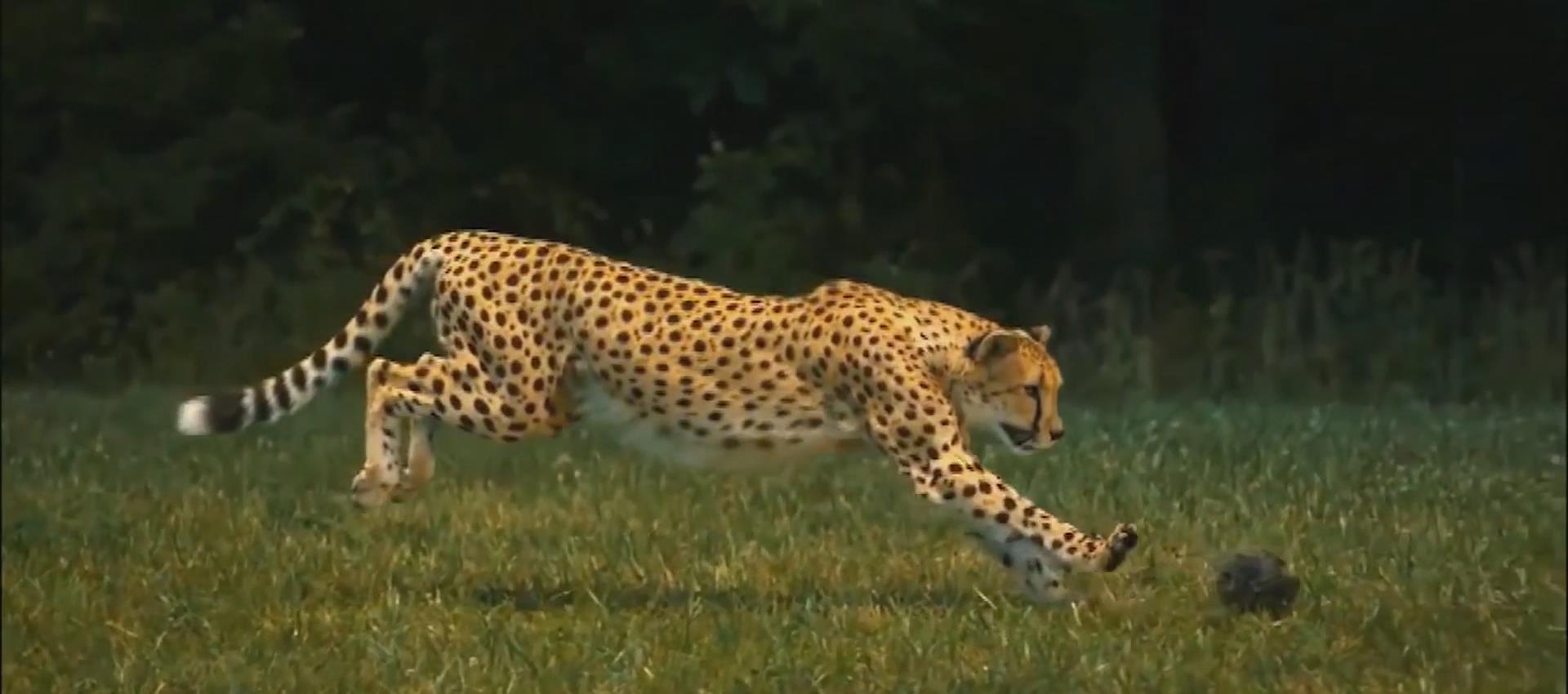CS 71 动物世界