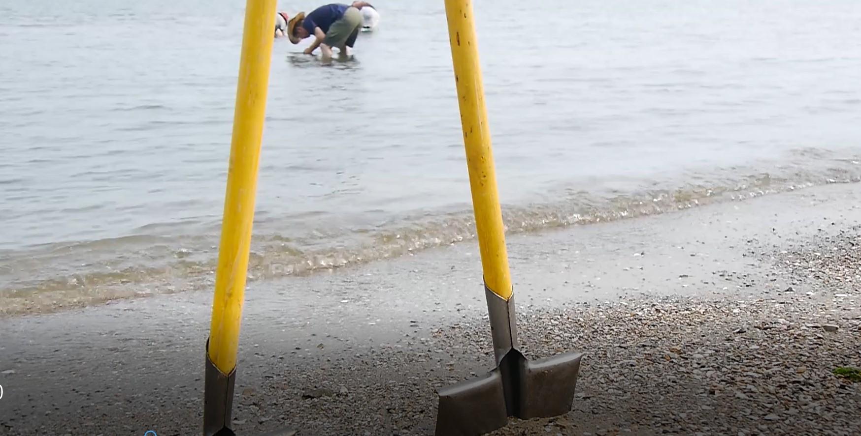 休闲沙滩海边人群海浪海鸥平静的大海视频背景