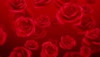 红玫瑰浪漫心型唯美婚礼背景