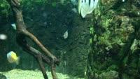 100 \- 鱼 鱼儿 海洋 海洋世界 海洋生物 美丽的鱼