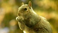 5、吃食物的兔子Gree