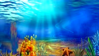 可爱珊瑚鱼